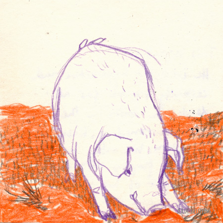 AST 0003 - Rufus